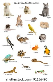 Collage of pets and animals in Italian in front of white background, studio shot