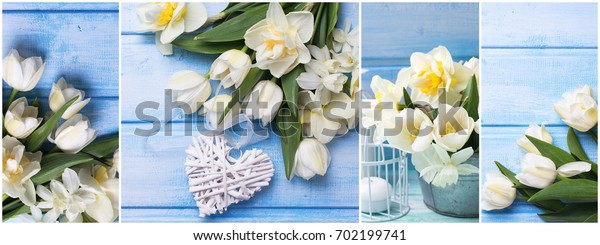 Collage from photos with  white daffodils and tulips  flowers , decorative heart and candle on blue wooden planks. Spring, Easter time. Floral background. Spring site header.