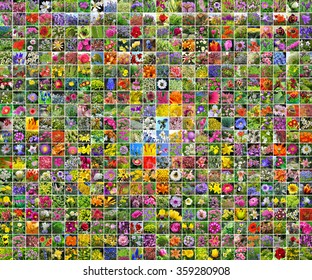 A collage of pictures of flowers. Decorative garden flowers grown in the gardens of Siberia