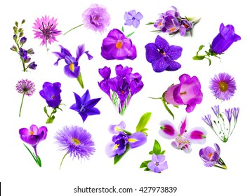 Collage of purple color flowers, isolated on white