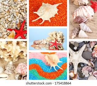 Collage of seashells close-up