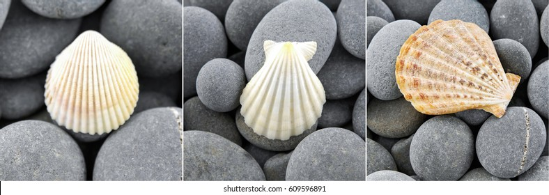 Collage of Shell and pebbles