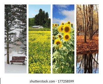 Collage showing pictures of four season