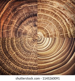 Collage of Stump tree felled - section of the trunk with annual rings. Slice wood.