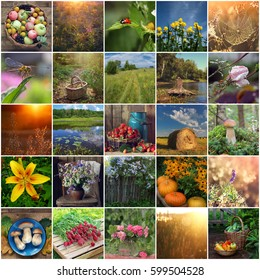 collage of summer pictures. morning, dawn, nature, forest, river, sunset, grass, mushrooms, berries, flowers, fruit, pumpkin, rain, insect, radishes, rose