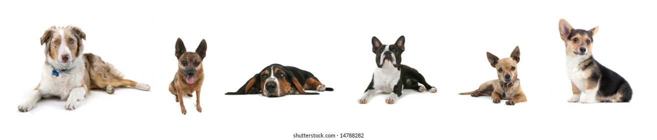 a collage of a variety of dogs on white