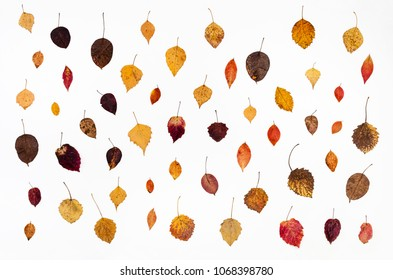 collage from various fallen autumn leaves on white background