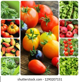 Collage of vegetables and fruit - products of vegetable garden. Healthy eating consept. Gardening background .