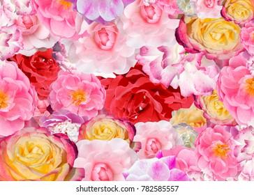 rose screensaver images stock photos vectors shutterstock