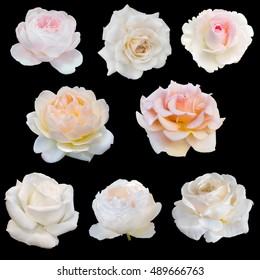 collage of white roses isolated on black background