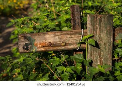 Collapsed fence among green vegetation