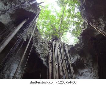 Collapsed Roof of Cave and Adaptive Vegetation on Bahama Island of Eleuthera