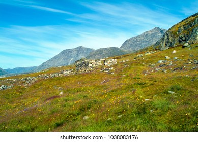 Collapsed Viking homes and cemetery in the beautiful Harebell Meadow at Hvalsey, Greenland. Houses eventually collapsed because they were built over the bodies of the dead. 985 to 1540 AD.