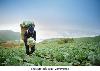 Collard and farmer on farming background