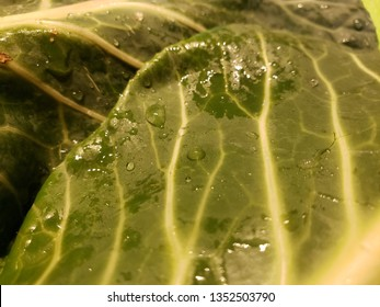 Collard Green Closeup