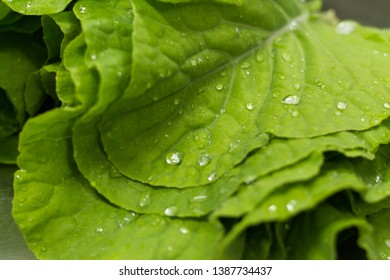 Collard greens with  water droplets