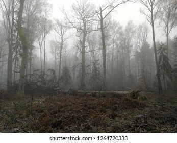 Colld misty morning of autumn in deciduous stand, Bialowieza Forest, Poland, Europe