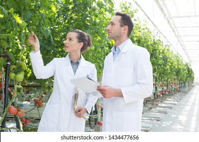 Colleagues discussing over notepad while examining plants at greenhouse