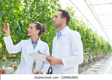 Colleagues discussing while examining plants at greenhouse both are wearing lab coats