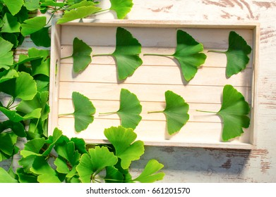 Collected medicinal leaves of the Ginkgo biloba tree on the table wooden