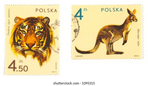 Collectible stamps from Poland. Set with exotic animals - kangaroo and a tiger.