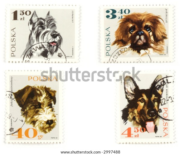 Collectible stamps from Poland. Set with well-bred dogs.