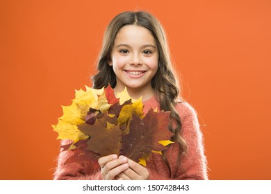 Collecting leaves. Natural treasures. Color pigment. Changes in nature. Happy little girl with maple leaves. Small child hold autumn leaves. Cute happy smiling kid playing with leaves. Botany concept.