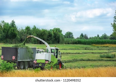 Collecting mowed lucerne with a self-propelled forager and a trailer to carry it to the silo, on an agricultural field near Schwabisch Hall, Germany.