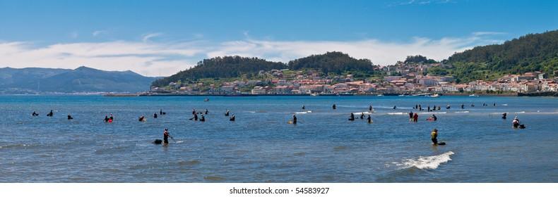Collecting shellfish in Galicia.