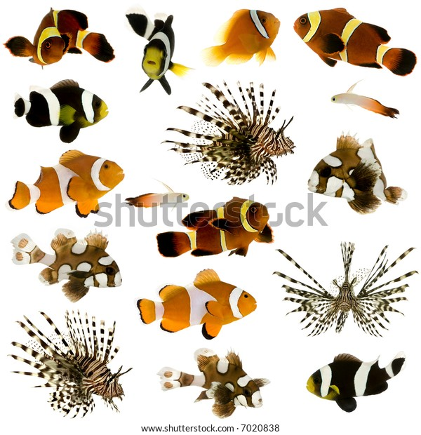 Collection of 17 tropical fish in different sizes and different positions in front of a white background