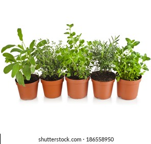 Collection of aromatic herbs in brown flower pot isolated on white background