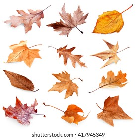 Collection of autumn dried leaves, isolated on white