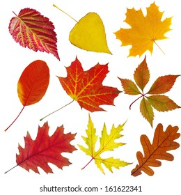 Collection of autumn leaves. Isolated on white