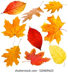 Collection of autumn leaves on white background