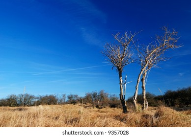 collection of bald trees in the dunes.