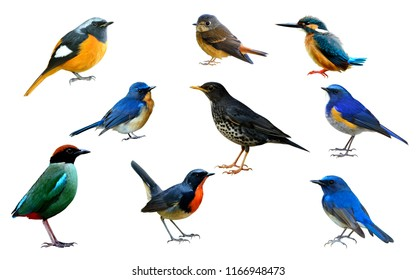 Collection of beautiful birds isolated on white background for commercial and nature advertisement, exotic nature