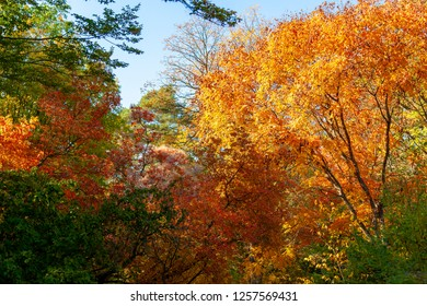 Collection of Beautiful Colorful Autumn Leaves / green, yellow, orange, red