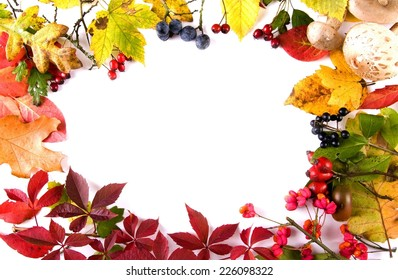collection beautiful colorful autumn leaves and berries isolated on white background