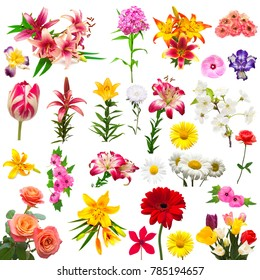 Collection of beautiful colorful flowers tulips, carnation, lilies, iris, chamomile, rose, hibiscus, lavatera, morning glory, phlox, astra, cyclamen isolated on white background. Summer. Spring. Flat