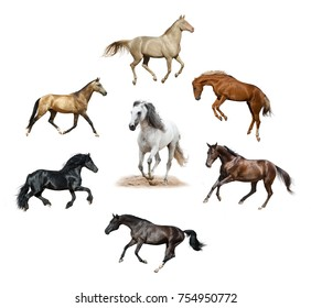Collection of beautiful different colors horses isolated over a white background