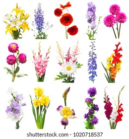 Collection beautiful flowers assorted delphinium, gladiolus, lily, iris, poppy, daffodil, gerbera, bell isolated on white background. Set flowers red, pink, purple, orange and yellow. Flat lay, top