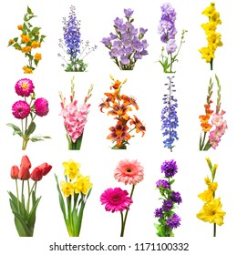 Collection beautiful flowers assorted delphinium, gladiolus, lily, kerria japonica, daffodil, gerbera, bell and tulip isolated on white background. Flat lay, top view