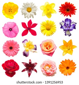 Collection of beautiful iris, cyclamen, lilies, tulips, chamomile, roses, gerbera, calendula and others isolated on white background. Card flowers. Easter. Spring Set. Flat lay, top view