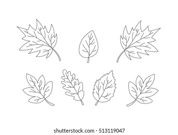 collection of beautiful leaves. Only line