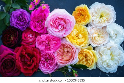 Collection of beautiful multi-colored roses, top view