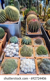Collection of beautiful rare cactus in pot for sell and decorate for background. Various of cactus plant in top view for hipster pattern in cactus shop.