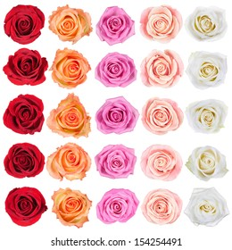 Collection of beautiful roses, isolated on the white background.