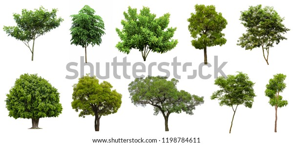 Collection Beautiful Trees Isolated on white background , Suitable for use in architectural design , Decoration work , Used with natural articles both on print and website.