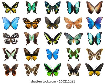 Collection of beautiful tropical butterflies isolated on white background