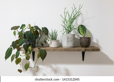 Collection of beautiful tropical plants on wooden shelf - Shutterstock ID 1415312045